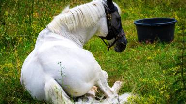 Länsstyrelsen har ansvaret för att kontrollera att djuren har det bra och att djurskyddslagen följs. Om du har frågor eller ärenden inom djurskydd ska du vända dig till länsstyrelsen i Skåne.