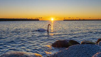 Trelleborg ska vara en framgångskommun med hög livskvalitet och en långsiktigt hållbar tillväxt. Genom långsiktig stadsutveckling tas Trelleborgs läge i Öresundsregionen och närheten till Europa till vara, vilket stärker kommunen som regional kärna.