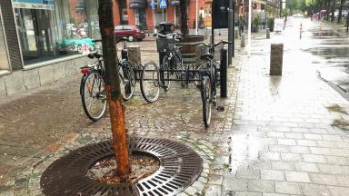 Vandaliserat träd i Trelleborg
