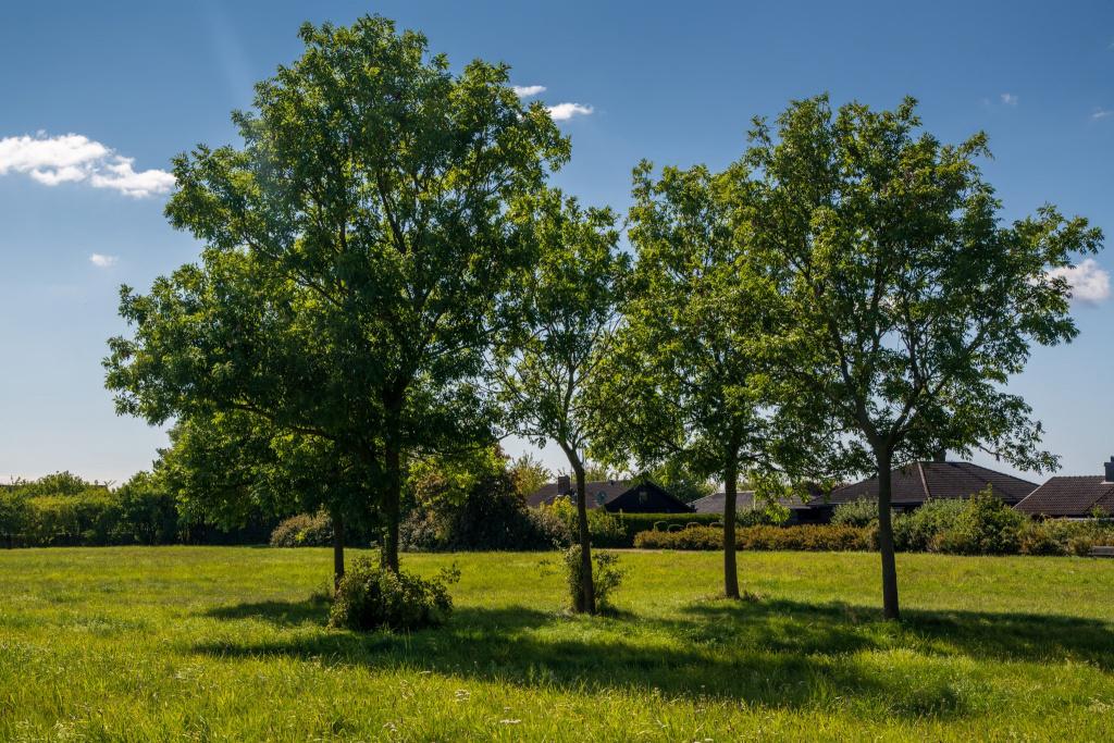 Östervång, markanvisning, träd och villor